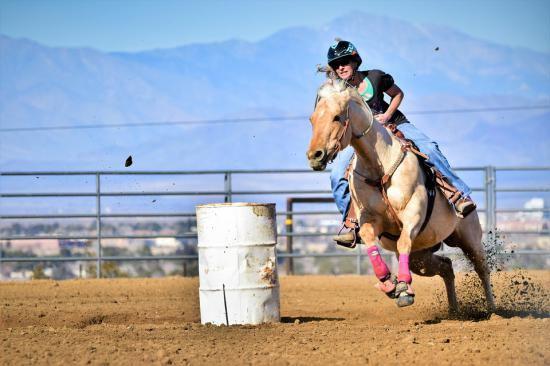چرا در شرط بندی اسب دوانی شرکت کنیم؟