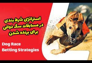 استراتژی شرط بندی در مسابقات سگ دوانی و برد تضمینی