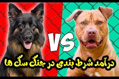 شرط بندی در جنگ سگ ها Dog Fight Betting در بهترین سایت قمار